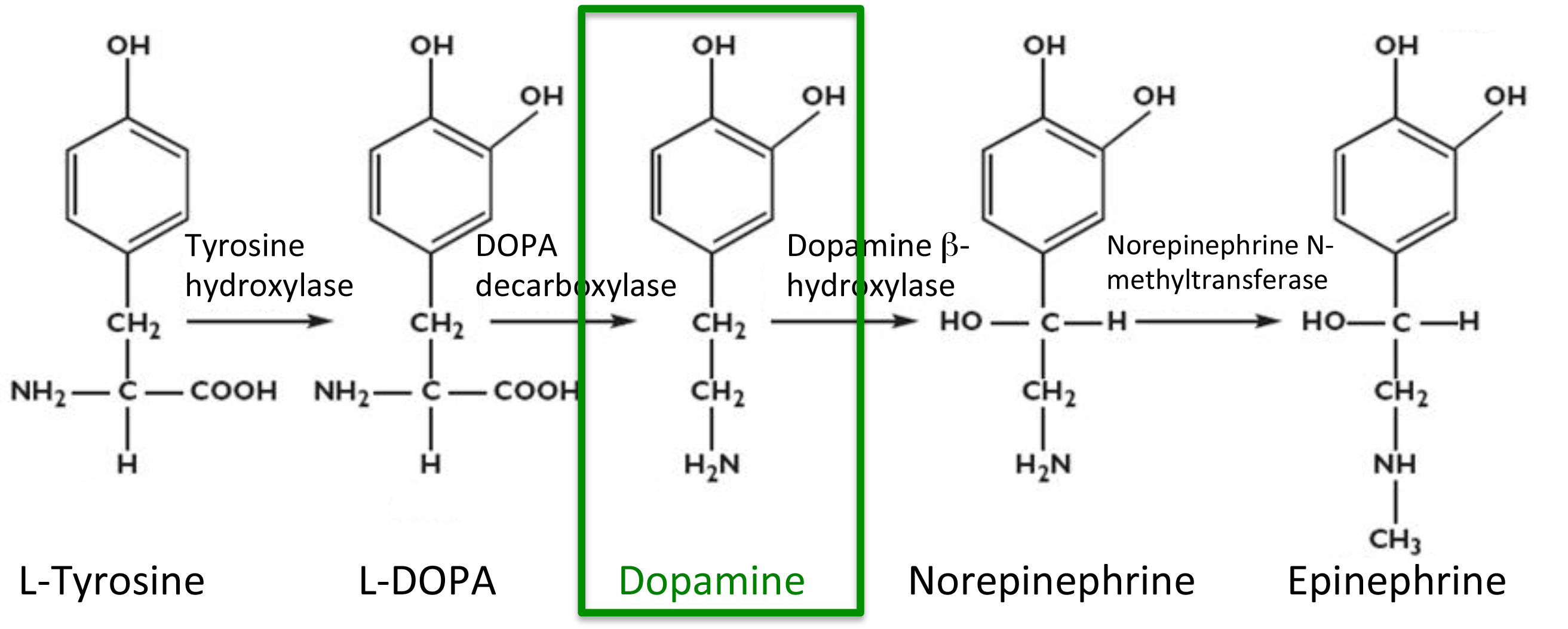 Dopamine a symbol of hope journey with parkinsons dopaminenthesis2 biocorpaavc