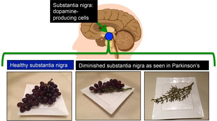 PD_grapes.B1