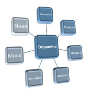 Dopamine.roles.150803