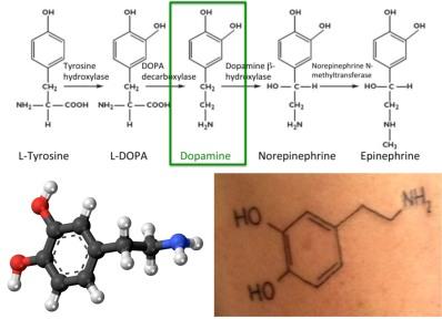 Dopamine.structures.150803