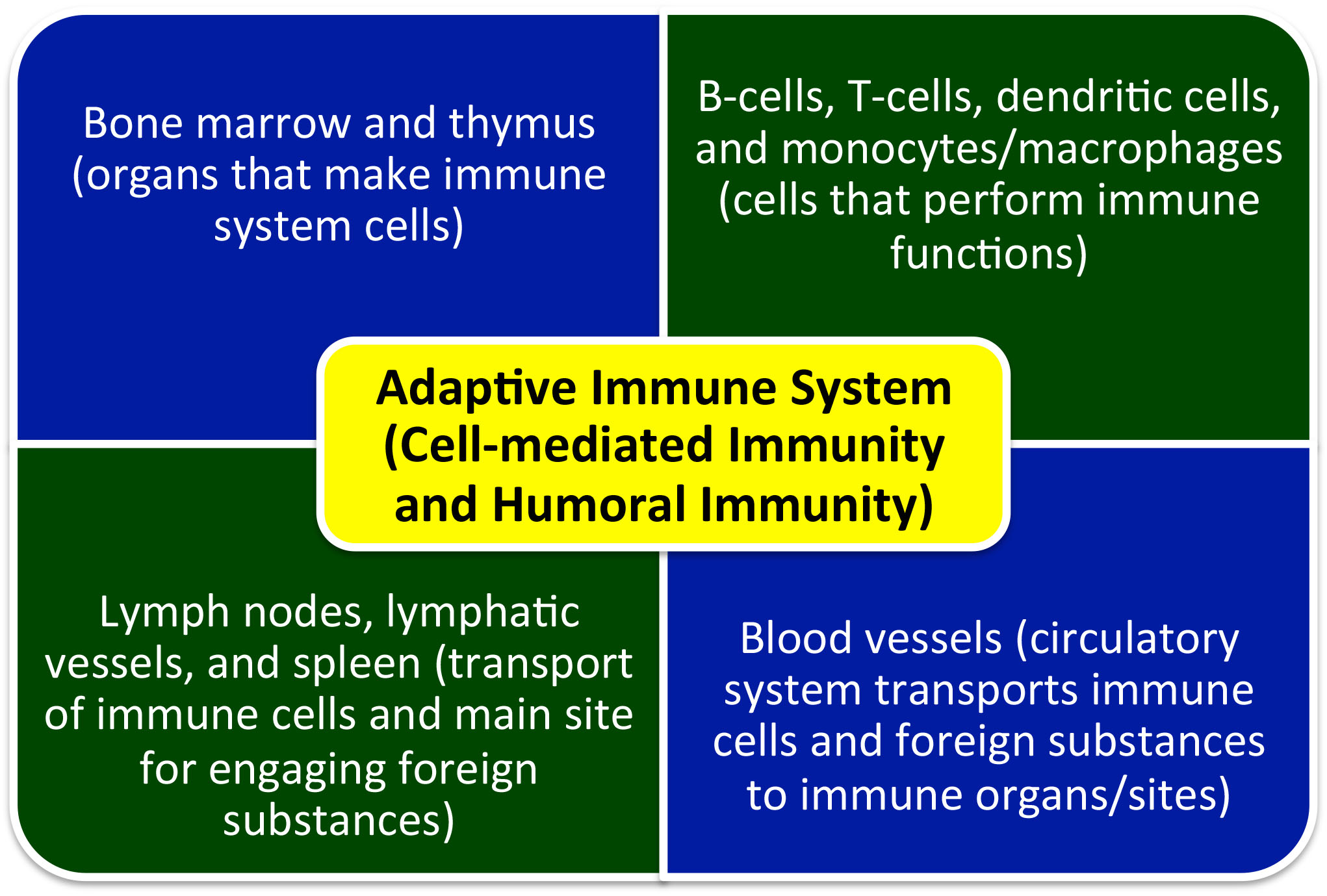 Immune System And Parkinsons Part 1 The Brain And Immune System