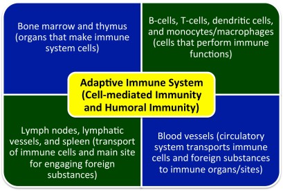 PD-Immune.system.150505a