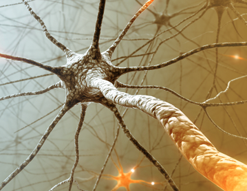 an introduction to ninds multiple sclerosis Neurons, signal and messages, body - the nervous system and multiple sclerosis.