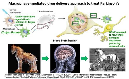 Macrophages+Parkinsons.160208