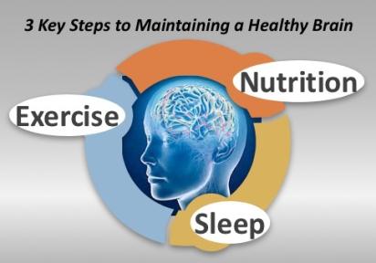 17.12.28.Healthy_brain