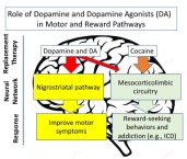 18.01.07.Dopamine_Motor_Reward
