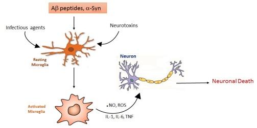 activated_microglia